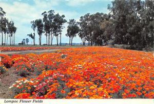 Lompoc Flower Fields - Santa Ynez, California
