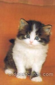 Cat, Cats, Postcard Post Card