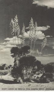 DEMING, New Mexico, 1930s; Desert Flowers & Mountain Peaks, ADV; Conoco TOURAIDE
