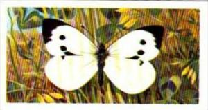 Brooke Bond Tea British Butterflies No 40 Large White