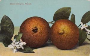 Trees Naval Oranges In Florida 1913