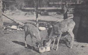 California Idyllwild Deer Feeding Time Artvue