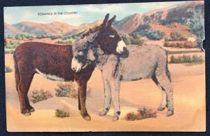Unused Linen Postcard Romance Donkey/Burro LB