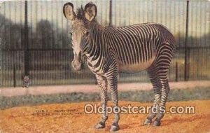 New York Zoological Park, USA Grevey Zebra Unused