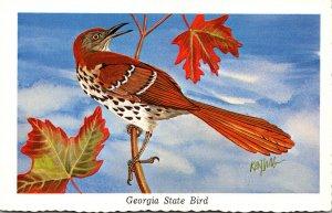 Georgia State Bird The Brown Thrasher