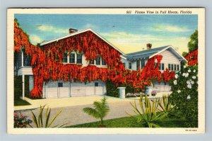 Flame Vine In Full Bloom, Linen Florida c1940 Postcard