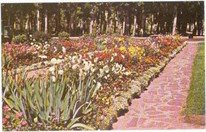 Flower Gardens in Washoe Park, Anaconda, Montana, MT, Chrome