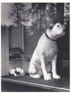Los Angeles How Much Is That Dog Doggie In The Window RPC USA Photo Postcard