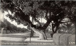 Charter Oak University Ave and Waverly St Palo Alto CA Vintage Postcard A19