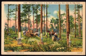 South Carolina Turpentine Industry in the South Collecting Gum Pine Trees LINEN