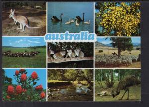 Multi-view Australia BIN