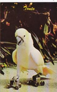Florida Miami Tonto The Cockatoo Roller Skating Parrot Jungle Red Road
