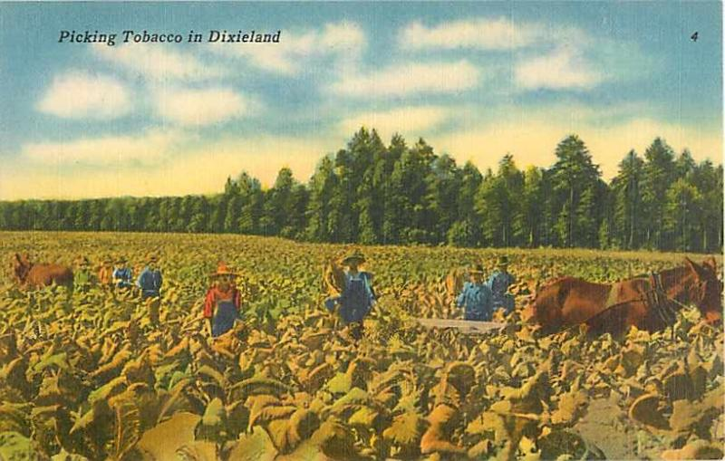 Linen Card of Picking Tobacco in Dixieland