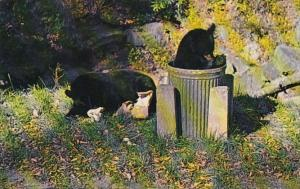 Tennessee Smoky Mountains Chow Time Bear Cubs In Garbage Cans