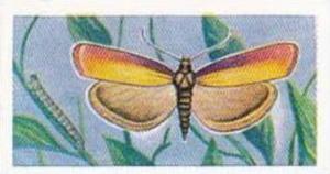 Swettenhams Tea Vintage Trade Card Butterflies & Moths 1958 No 8 Rosy Veneer