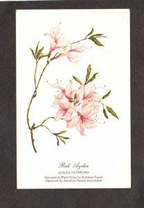 Flowers Pink Azaleas Water Color Painting Kathleen Cassel Artist Nature