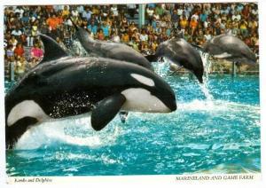 Kandu the Killer Whale & Dolphins , Marineland , Niagra Falls , Ontario , C...