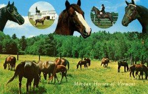 VT - Morgan Horses