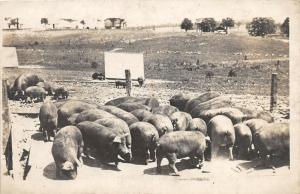 F13/ Occupational RPPC Postcard c1910 Pig Hog Farm Fence 10
