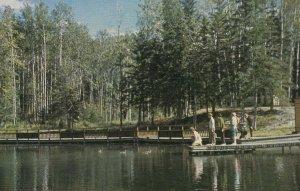 WASKESIU, Prince Albert National Park, Saskatchewan, Canada, 1950-60s; Feedin...