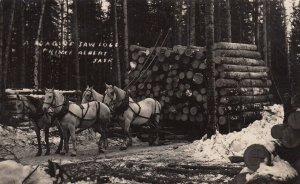 RP; PRINCE ALBERT, Saskatchewan, 1900-10s; A Load of Saw Logs