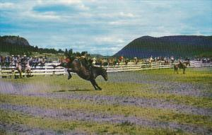Canada Williams Lake Stampede British Columbia