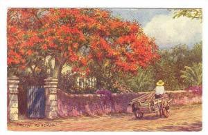Man On Cart, Royal Poinciana, Nassau, Bahamas, PU-1956
