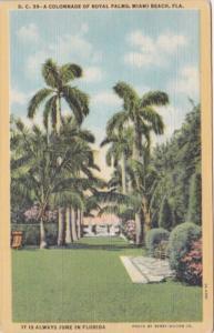 Florida Miami Beach Colonnade Of Royal Palms 1946 Curteich