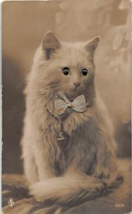 F25/ Interesting RPPC Photo Postcard c1920s Glass Eye Cat Bowtie Cute 25