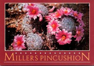 Arizona Desert Scene Millers Pincushion Cactus