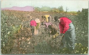 Vintage 1909 Alabama Postcard Picking Cotton in Alabama Black Field Workers