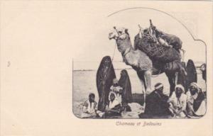 Egypt Chameau et Bedouins