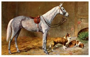 Dog , Jumper  Horse with Collies