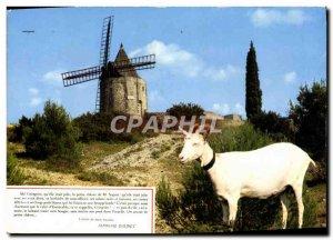 Postcard Modern Fontvieille Moulin de Daudet Chevre