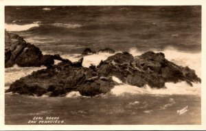 California San Francisco Seal Rocks Real Photo