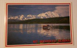 Vintage Postcard Moose Wonder Lake Mt McKinley Alaska Anchorage 1989