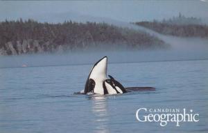 Killer Whales , Canadian Georaphic , Canada , 1992