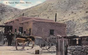 Typical Mud House, Donkeys, MEXICO, 00-10's
