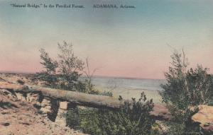 ADAMANA, Arizona, 1920-30s; In the Petrified Forest, Natural Bridge