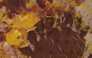 Prickly Pear Cactus In Bloom Flowers