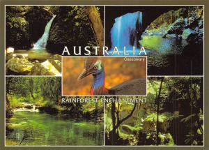 Australia Rainforests Hinterland region of enchantment