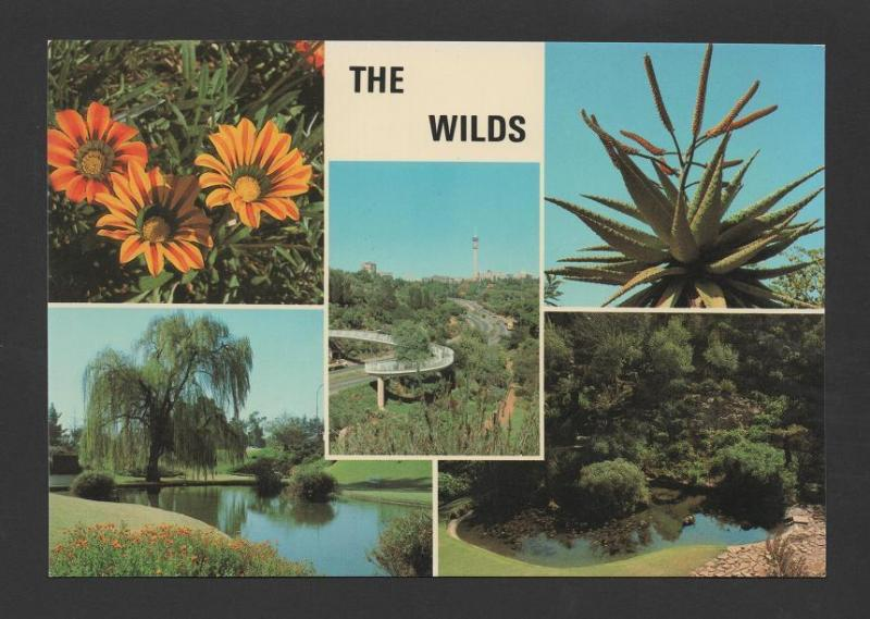 postcard 1970years SOUTH AFRICA THE WILDS FLORA BOT BOTANIC FLORE SUID AFRIKA
