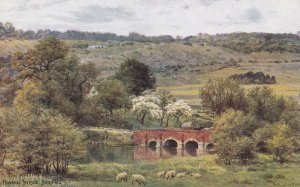 DORKING, Surrey, England, 1900-1910s; Boxhill Bridge, Sheep