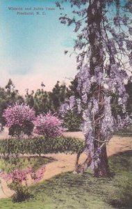 North Carolina Pinehurst Wisteria And Jubas Trees Albertype