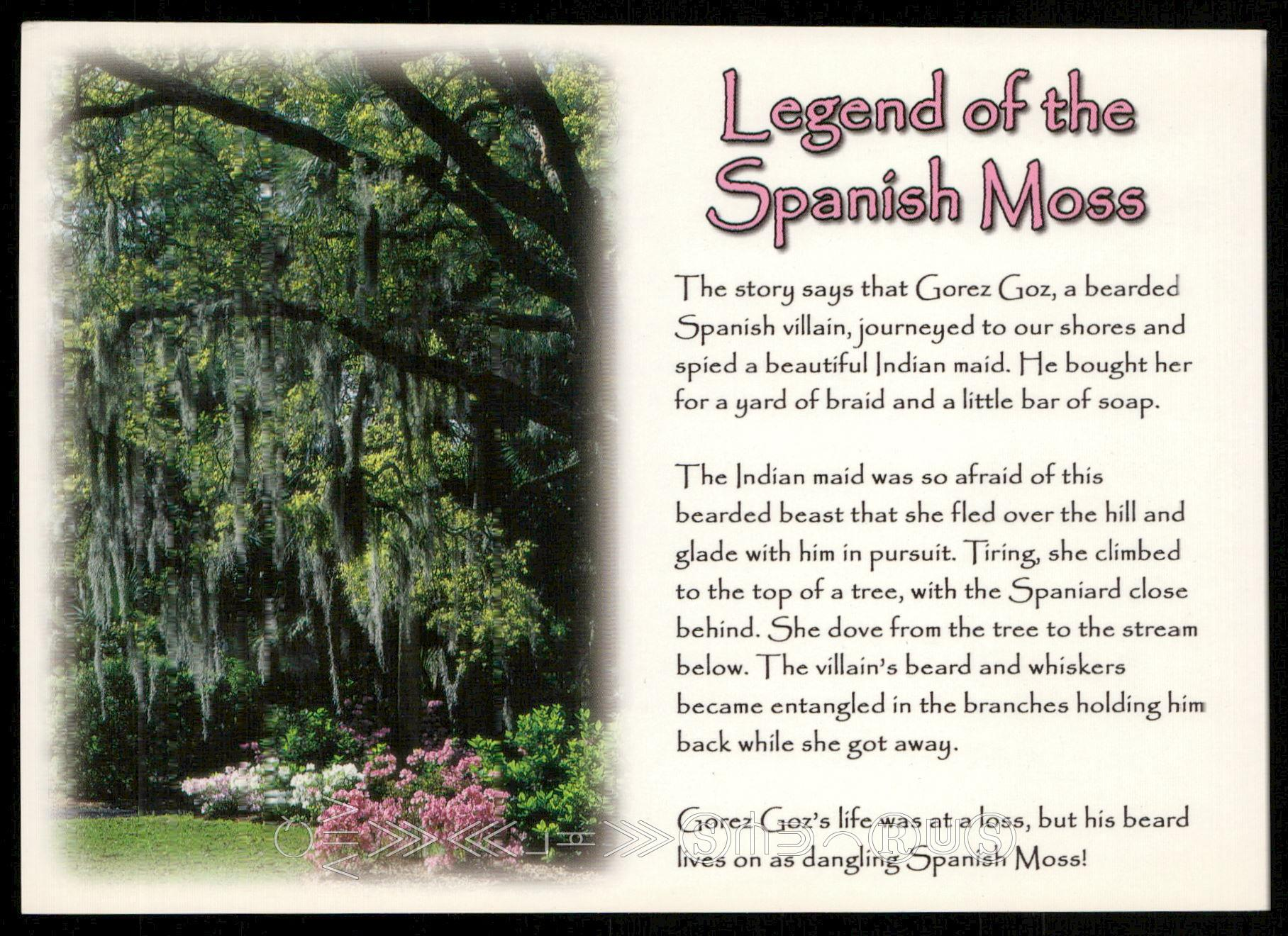 Legend of the Spanish Moss / HipPostcard