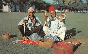 Singapore Indian Snake Charmers  Indian Snake Charmers