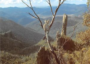 Koala Mother and Baby - National Park, Sydney