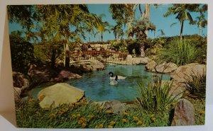 Vintage Postcard South American Black Necked Swan San Diego Zoo California