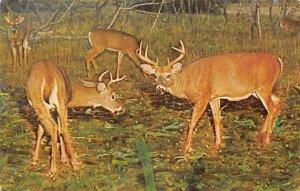 Deer Post Card Two Bucks Allegany State Park, NY, USA Unused