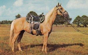 Horses ; Palomino Pony , 50-60s